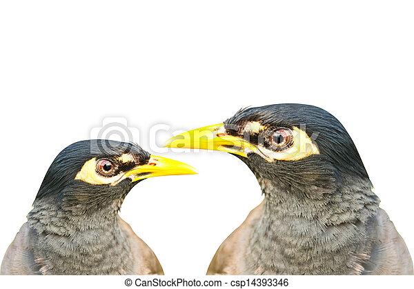 Birds on white background - csp14393346