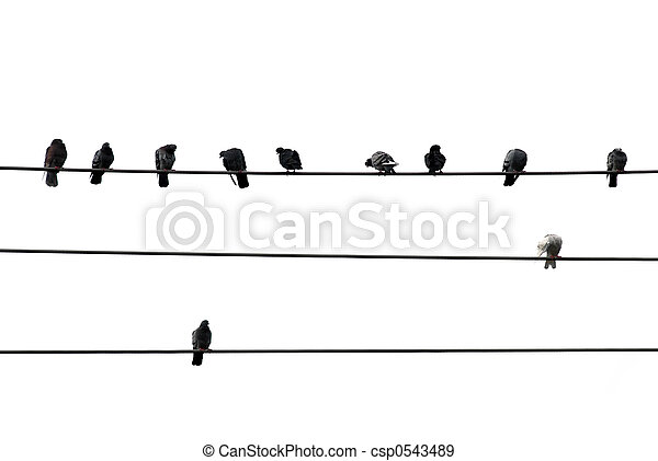 Birds on wire - csp0543489