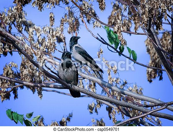 Birds - csp0549701