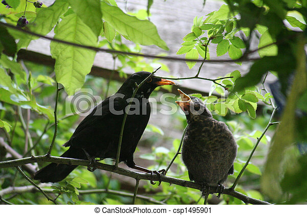 Birds - csp1495901