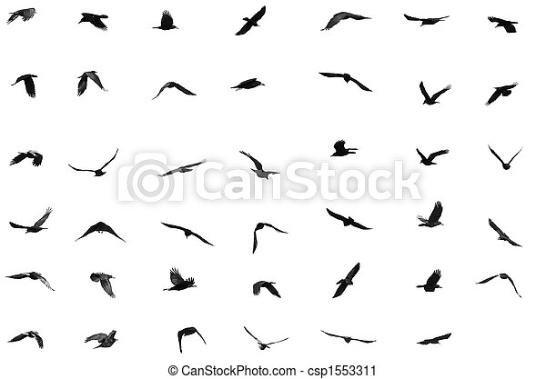 birds - csp1553311