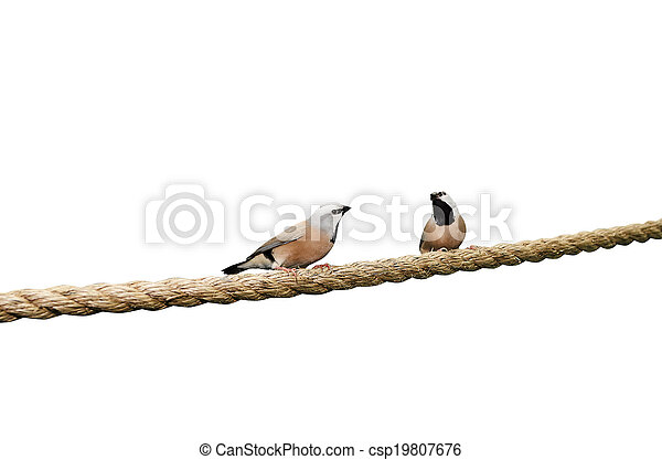 Birds - csp19807676