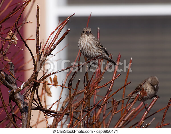 Birds - csp6950471