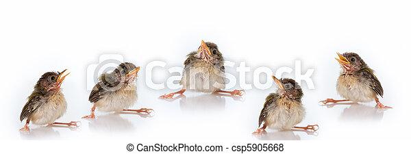birds - csp5905668