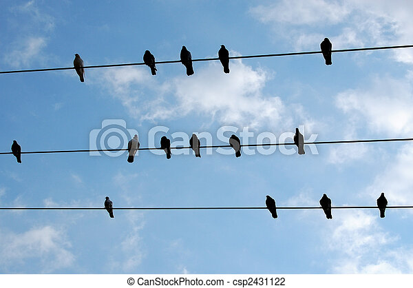 birds resting - csp2431122