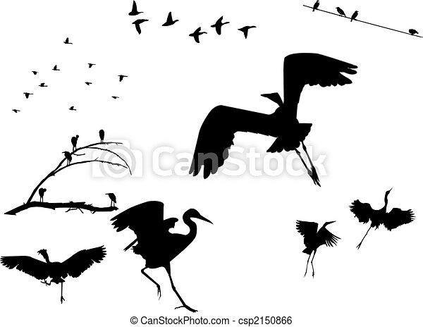 Birds Silhouettes - csp2150866