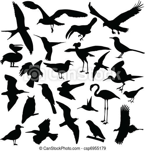Birds silhouettes - csp6955179