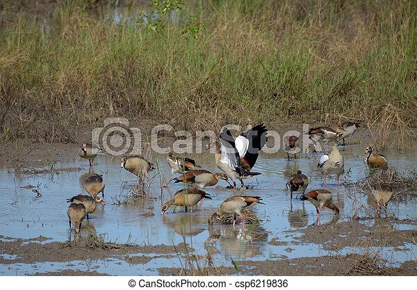 birds - csp6219836