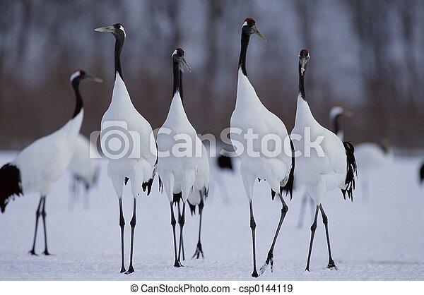 Birds - csp0144119