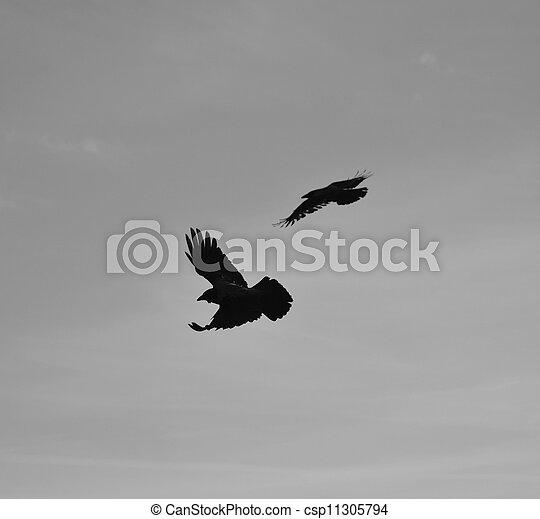 Birds - csp11305794
