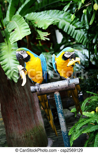 Birds. - csp2569129