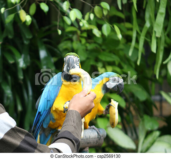 Birds. - csp2569130