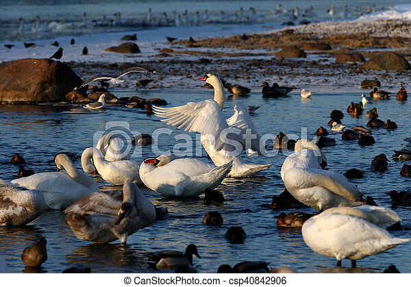 Birds - csp40842906
