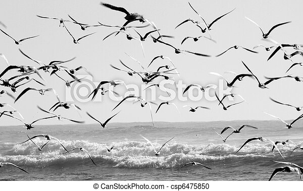 birds - csp6475850
