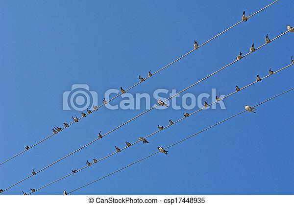 Birds - csp17448935