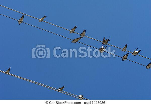 Birds - csp17448936