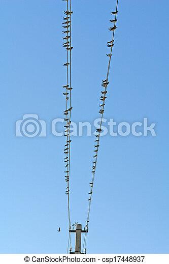 Birds - csp17448937