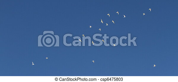 birds - csp6475803