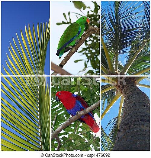 Birds & Trees - csp1476692