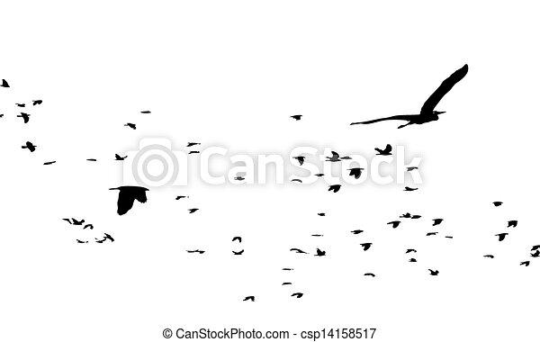 birds - csp14158517