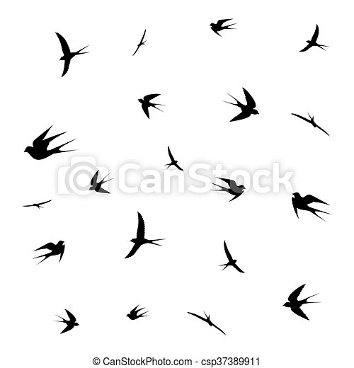 birds - csp37389911