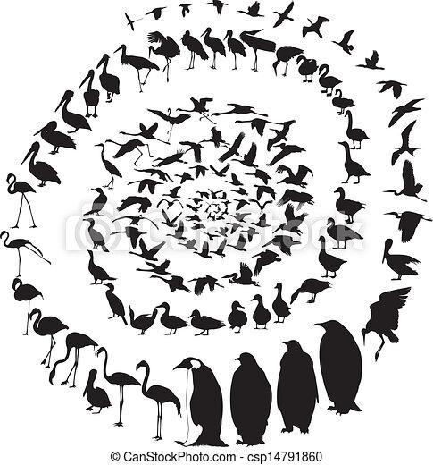 Birds Waterfowl in spiral - csp14791860