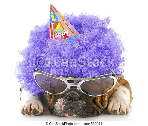 birthday, 犬 - csp4539041