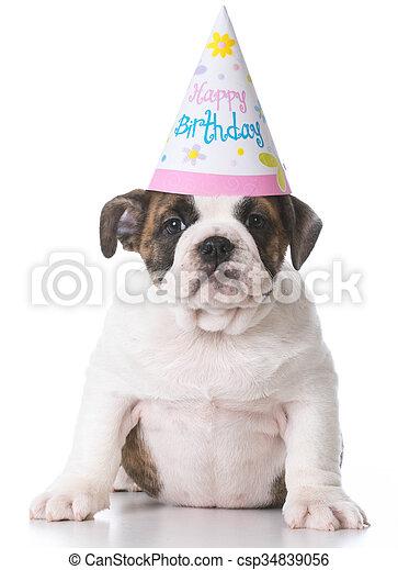 Birthday Bulldog