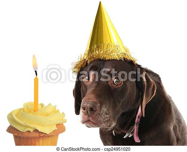 Birthday dog and cupcake - csp24951020