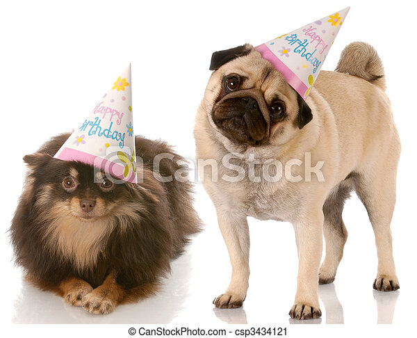 Birthday Dogs Pug And Pomeranian Wearing Happy Hats With