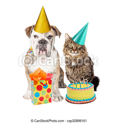 Cats Adoption Medicine Hat
