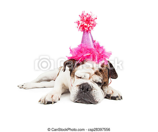 Birthday Party Pooper Dog In Pink Hat