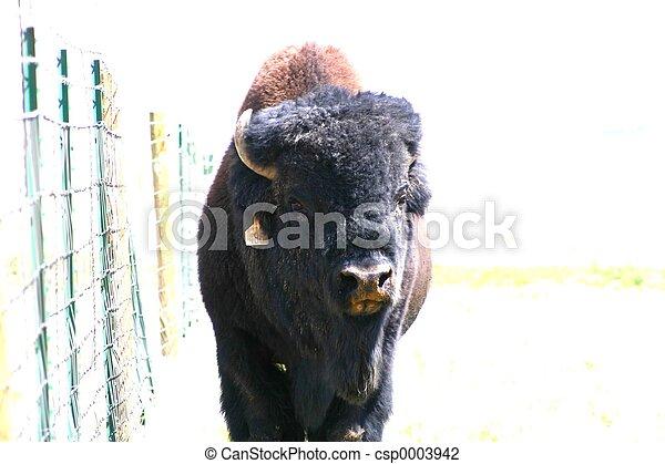 Bison 9273 - csp0003942