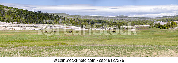 bison in Yellowstone - csp46127376