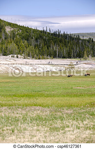 bison in Yellowstone - csp46127361