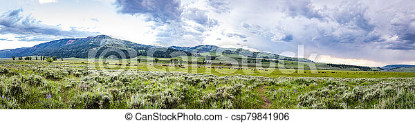 Bison in Yellowstone - csp79841906