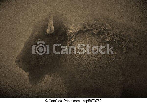 bison - csp5973760