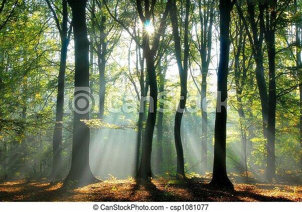 bjælker, igennem, træer, hæld, lys - csp1081077