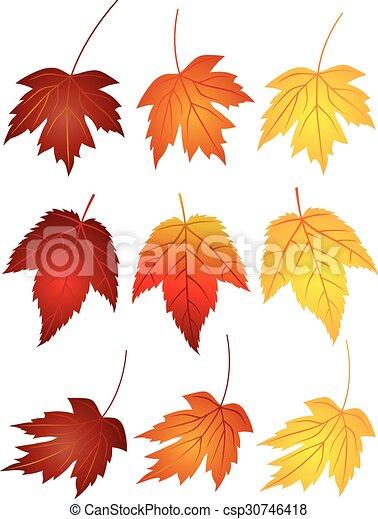 Blätter, ahorn, farben, abbildung, herbst. Blätter,... Vektor ...