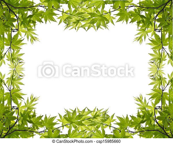 blätter, grün weiß, hintergrund - csp15985660