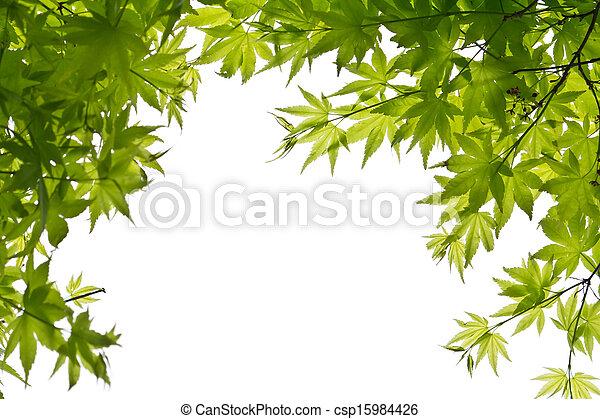 blätter, grün weiß, hintergrund - csp15984426