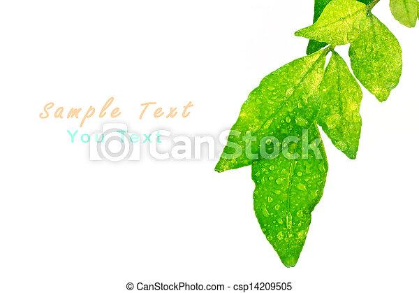 blätter, grün weiß, hintergrund - csp14209505