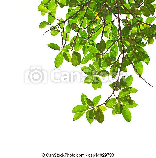 blätter, grün weiß, hintergrund - csp14029730