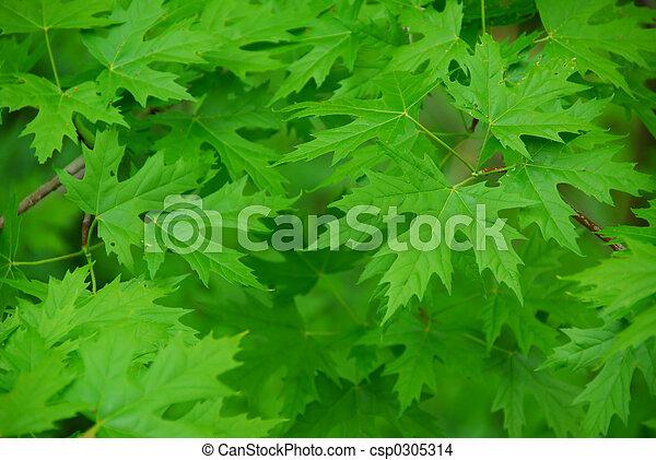 blätter, grüner hintergrund - csp0305314