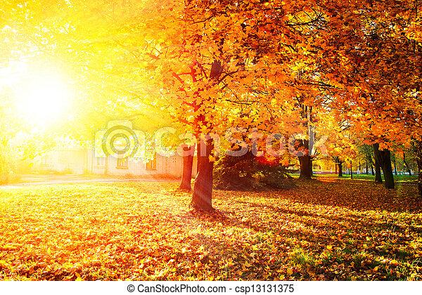 blätter, herbstlich, bäume, herbst, fall., park. - csp13131375