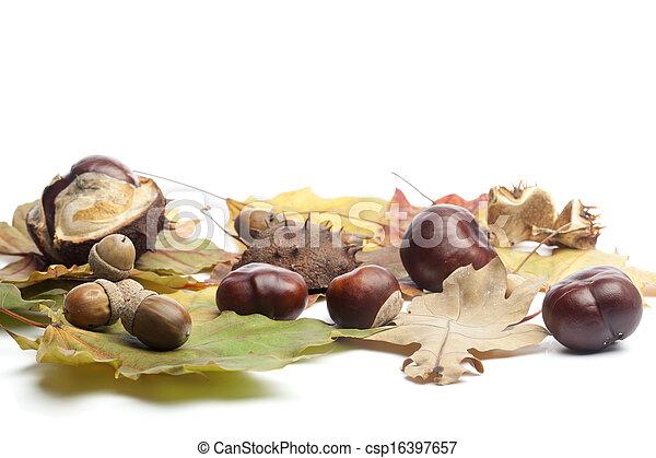 Brustnüsse, Eicheln und Blätter fallen - csp16397657