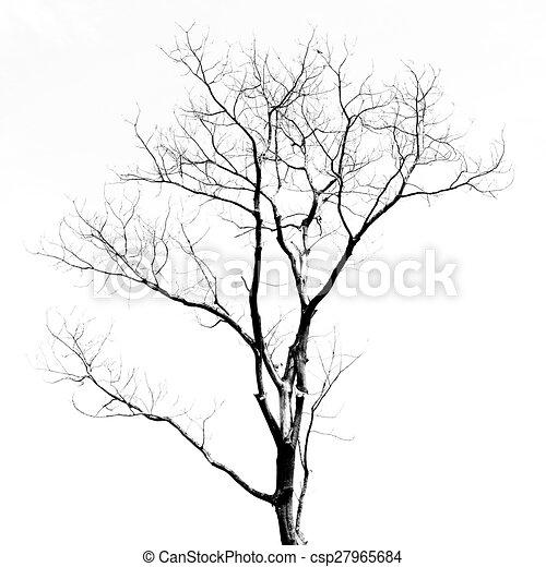 Toter Baum ohne Blätter - csp27965684