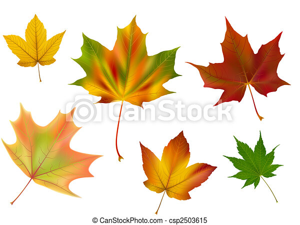 Blätter, vektor, verschieden, ahorn. Verschieden, gemacht ...