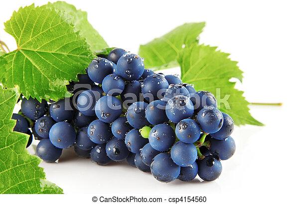 blå, druva lämnar, isolerat, frukt, grön - csp4154560