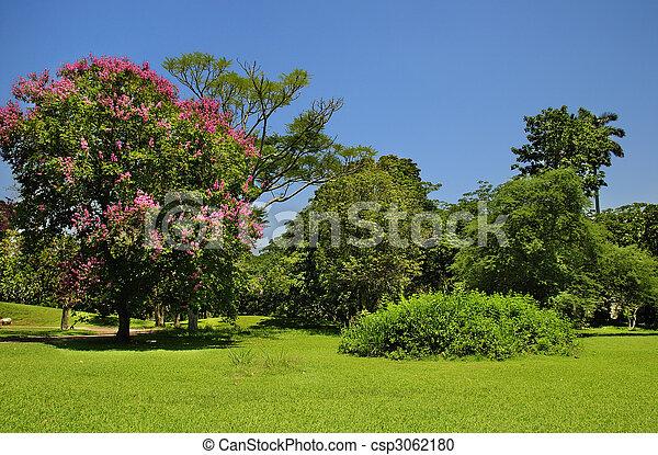 blå grønnes, himmel, træer, under - csp3062180